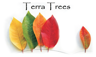 Welcome To Terra Trees